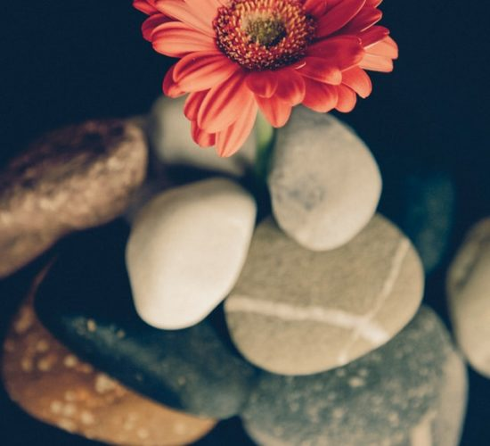 Image of a flower balancing on stones